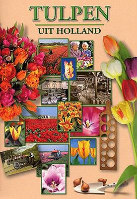 Kooijman-Tulpen-uit-Holland