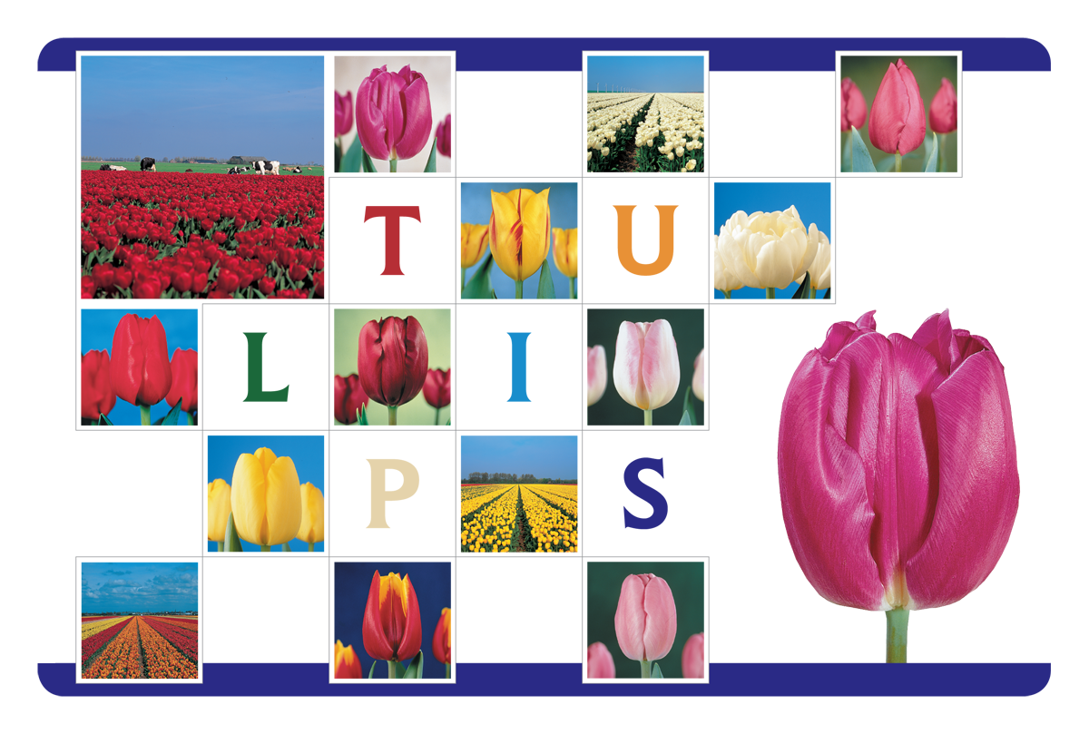 Placemat Tulips 1