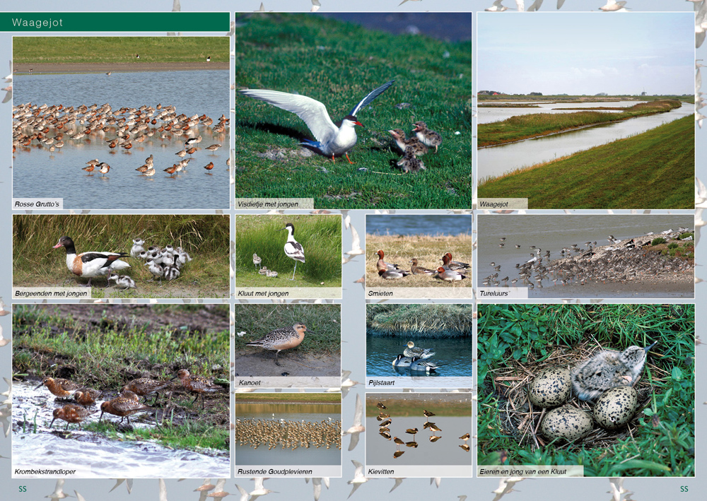 Texel_Pages_06